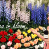 Sloaney TV: A day at the RHS Chelsea Flower Show