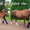 Goffs London Sale: Frankel's foal sells for over £1million