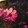 Flower Magic: How to grow wildflowers