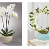 Cream Dream: Interior accessories for the summer months