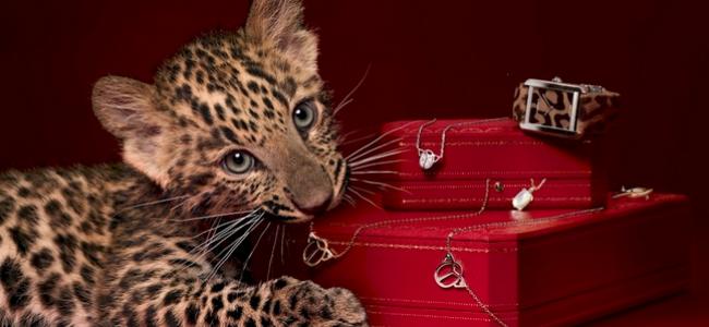 Le style et l'histoire: Cartier showcase luxury designs at Salon d'Honneur in Grand Palais