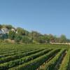 Justerini & Brooks launches exclusive fine wine events