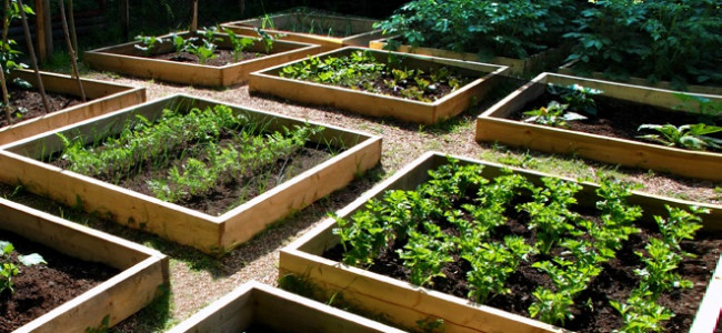 The Veg Grower's Almanac: Month by Month Planning and Planting