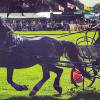 Living Heritage Wiltshire Game and Country Fair at Bowood