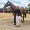 Badminton Horse Trials: Riders arrive in style