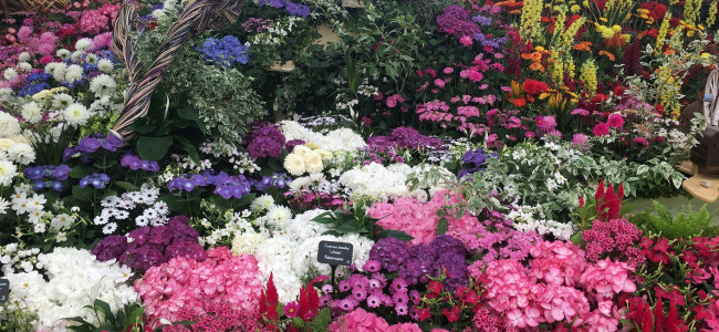 RHS Chelsea Flower Show 2018: World's most famous flower show returns in May