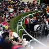 Goffs London Sale: Buy a horse on the eve of Royal Ascot and watch it race in front of The Queen