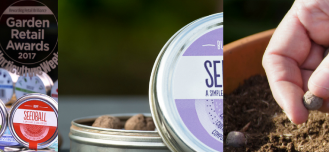 Seedball: Easy to plant wildflowers that will bring your garden to life