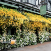 The Ivy Chelsea Garden unveils stunning floral installation by Jenny Packham