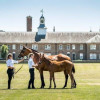 Royal Ascot 2018: Goffs London Sale starts the racing week in style before Harry and Meghan please crowds on day one