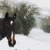 5 Ways to Care for Your Horse During Winter