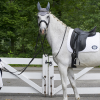 Basics tips that will help you provide complete care to your horse