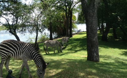 The Royal Livingstone Hotel in Zambia continues to  impress with its spectacular views and hospitality