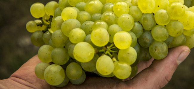 Chablis en vogue: What makes the French wine so special?