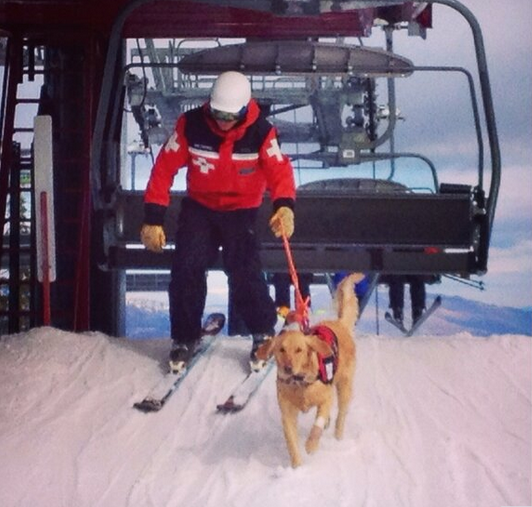 A rescue dog catches a ride on the ski lift