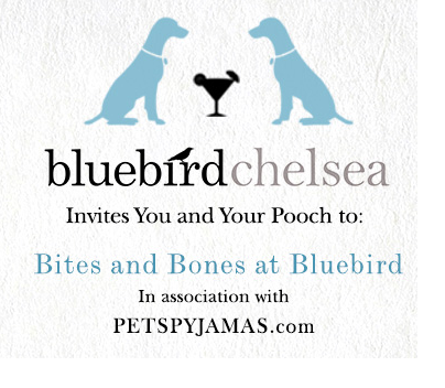 Celebrate all things canine at Bluebird Chelsea next week