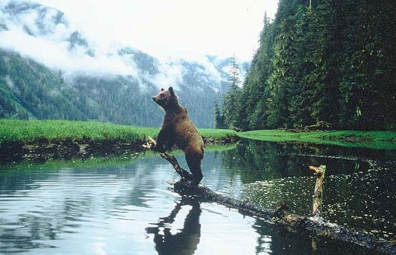 Canada is home to a large number of bears