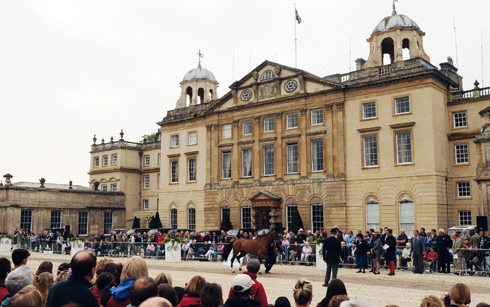 Badminton trot up in front of the house