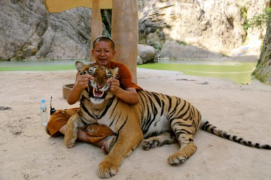 Tiger Temple in Thailand has seen much controversy over the treatment of animals