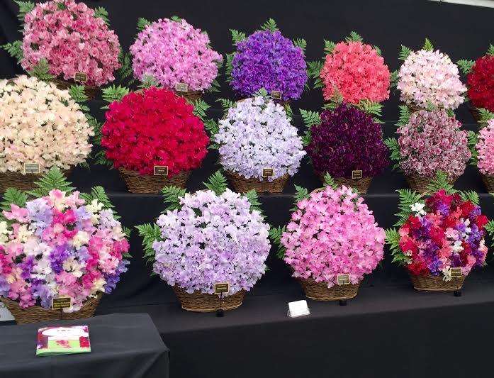 Chelsea Flower Show 2016